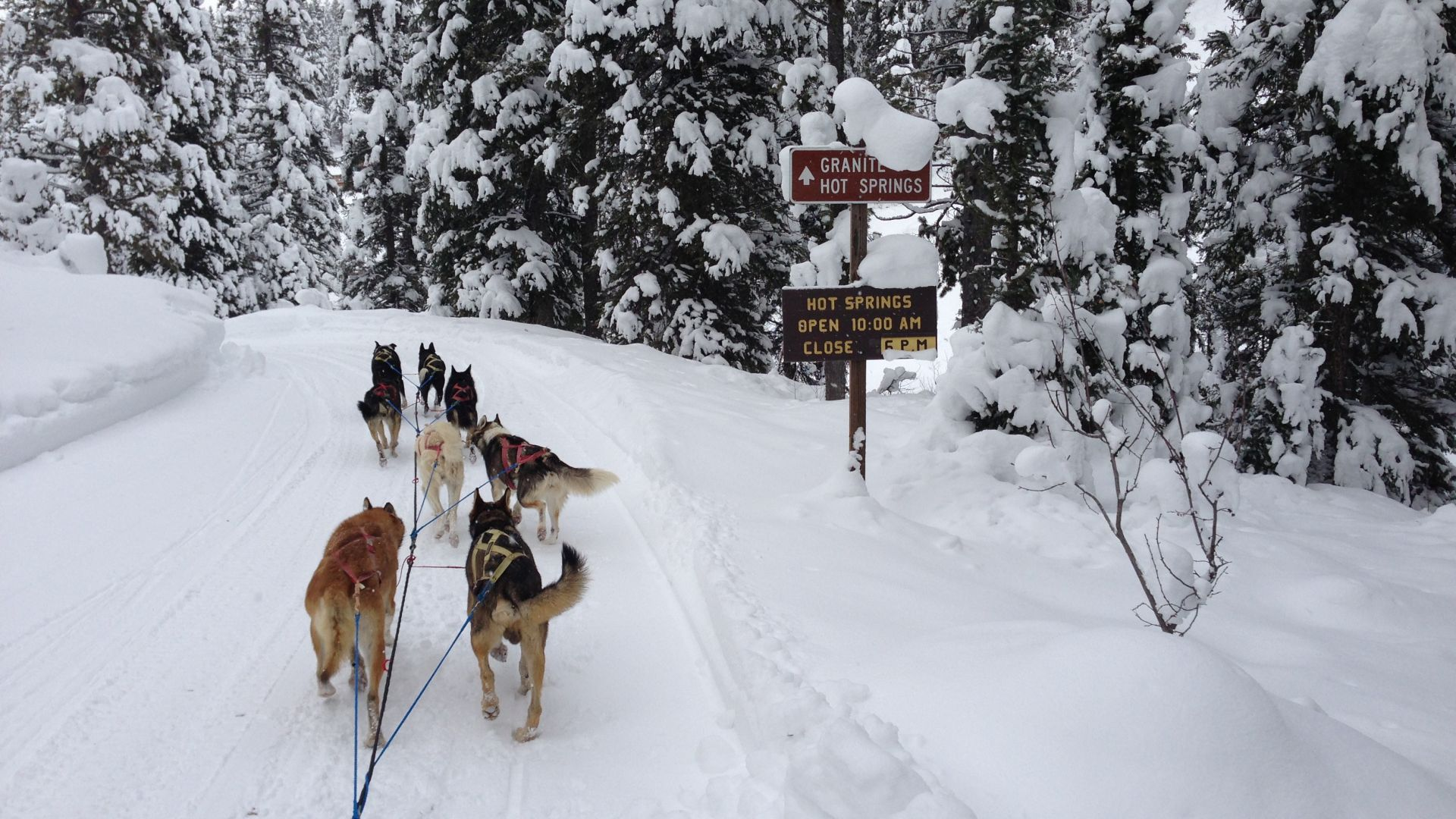 Wyoming Dog Sled Adventures