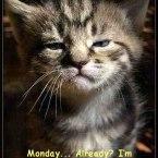 Ziua de luni cu spor