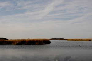 Sapelo Island is isolated © 2015 Karen Rubin/news-photos-features.com