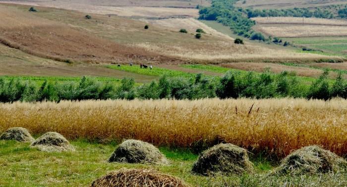 "Biking down rural roads in Albania's ""breadbasket"" © 2016 Karen Rubin/goingplacesfarandnear.com"