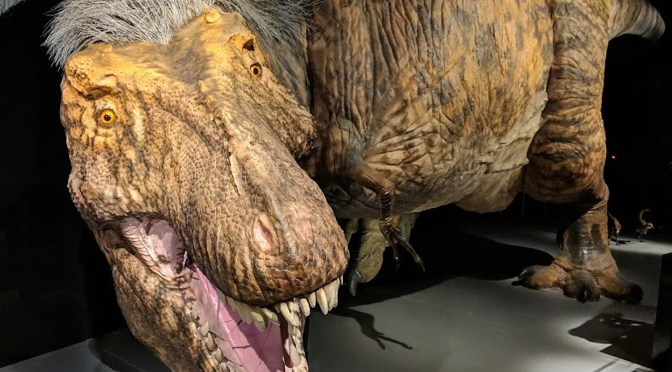 Come Face to Face with T Rex, The Ultimate Predator, at the American Museum of Natural History