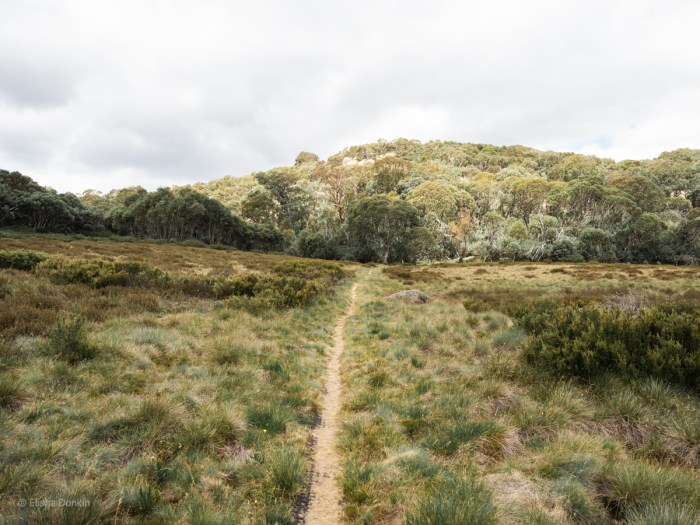 Mt Buffalo hiking trail
