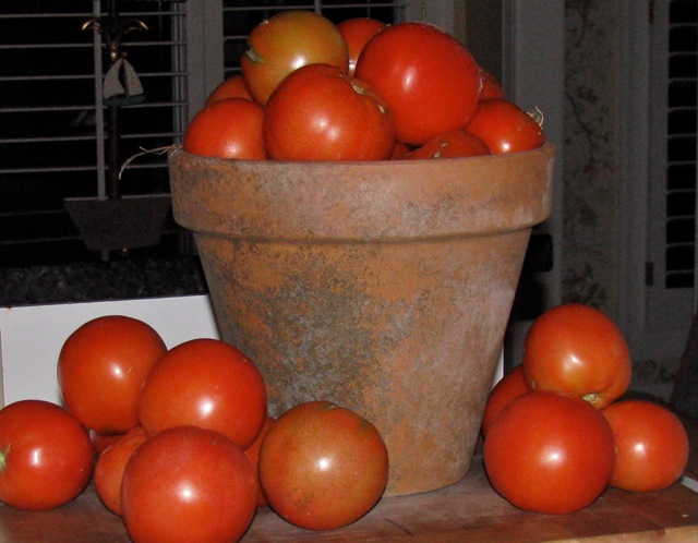 glorious tomatoes