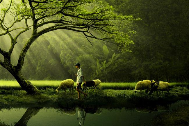 pengertian ekologi dan ekosistem