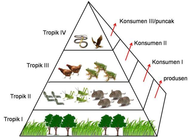 macam=macam ekologi