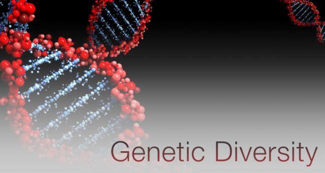 Contoh Keanekaragaman Hayati Tingkat Gen