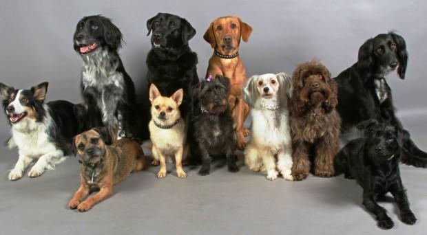 Keanekaragaman hayati tingkat gen pada anjing