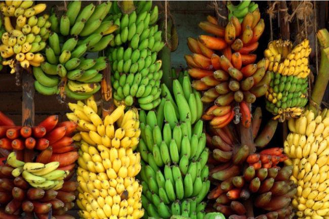 Keanekaragaman hayati tingkat gen pada pisang