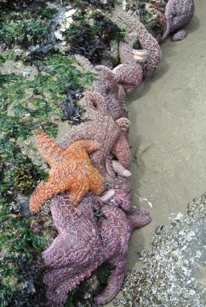 starfish friends