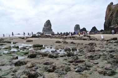 long shot of the needles and the tide pool exploring crowds
