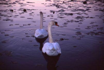 Eel Pond, Rye