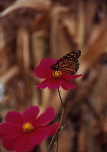 """I was telling this story of butterflies landing on me while I was fishing and my sister said """"That's not the only time that happened to you, I've seen it happen."""""""