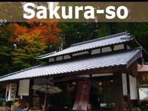 banner sakura_R