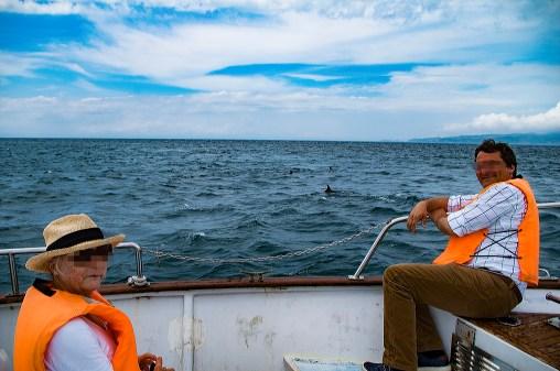 Dolphin watching, Amakusa