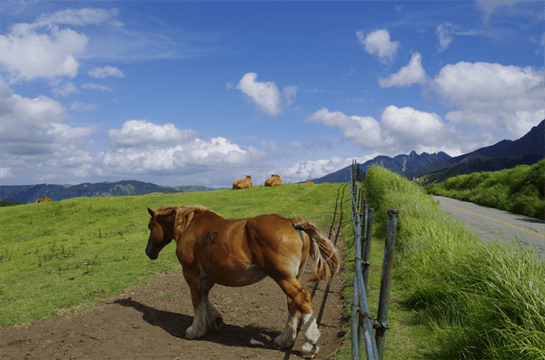 Pasture of Aso