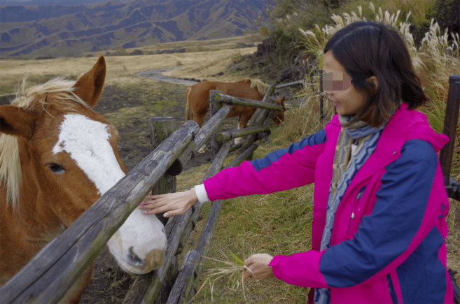 Feeding horses in Aso
