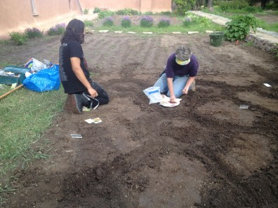 Volunteer Deb and Andres plant beans from last year's harvest.