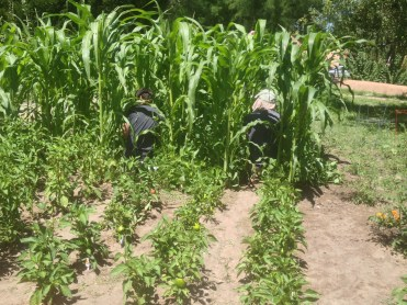 Eddie and Alex get lost in the corn.