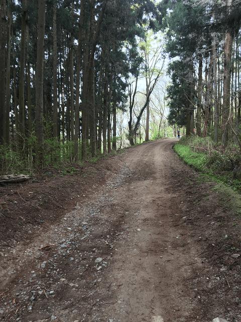 宝登山 登山道