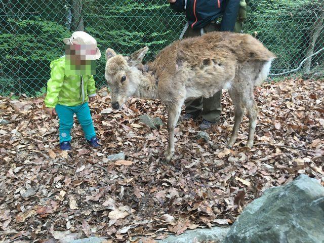 宝登山小動物園 鹿