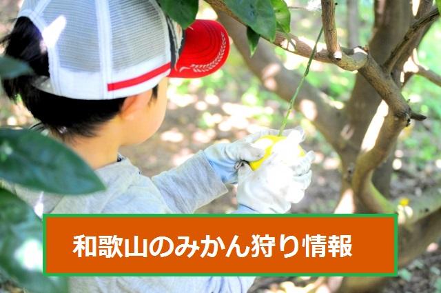 みかん狩り和歌山おすすめ人気農園