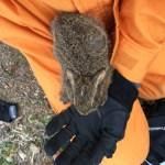 野ウサギに出会いました