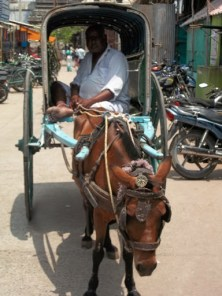 Man and his horse cart