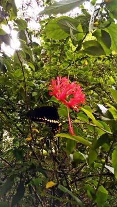 Oh Butterfly Butterfly Butterfly ...