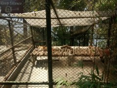 Lazy sleeping Leopard