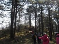 Trekking through the Pine Forest. PC : Sahil