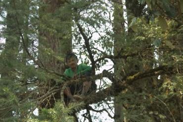 Cute Avinash, after he comfortably climbed the tree.