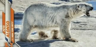 Pete Alonso topps polar bear card