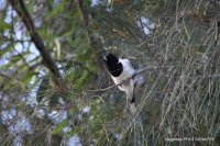 Coombahbah-Lakelands-Conservation-Area-Birds-033