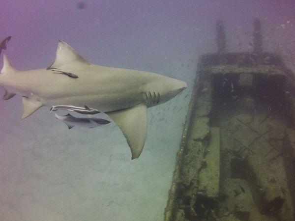 liz sharks 2