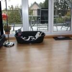 G-Wurf Paul neues Zuhause in Wanlo 24