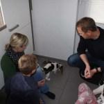 H-Wurf Happy Haydee neues Zuhause in Steinfurt 03