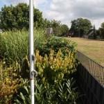 J-Wurf Jackson neues Zuhause in Bünde 15