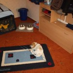J- Wurf Japser neues Zuhause in Stuhr 09