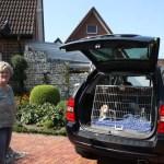 J-Wurf Jilly neues Zuhause in Bocholt 02