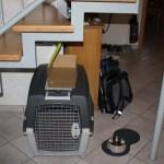 J-Wurf Jilly neues Zuhause in Bocholt 14