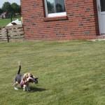 K-Wurf Kill Kenny neues Zuhause Weymeer 43