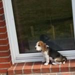 K-Wurf Kill Kenny neues Zuhause Weymeer 45