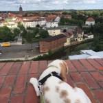 K-Wurf XXL Kerry neues Zuhause in Eilenburg 29