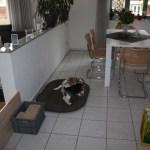 L-Wurf Lovely neues Zuhause Baunatal 11