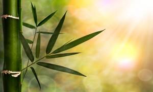 bamboo-22