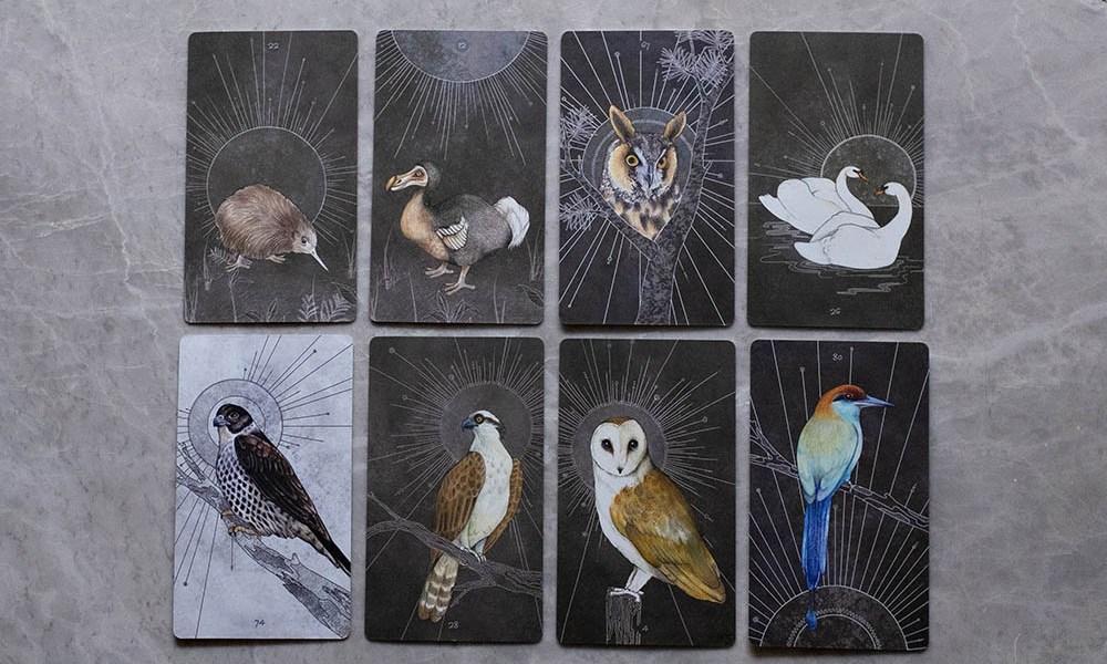 Yin & Birds