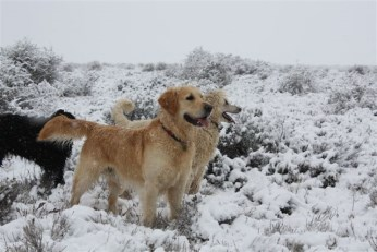 Eindelik Snow July 2012 289
