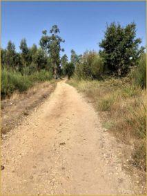 Buen Camino Santiago de Compostelle (63)