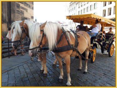 Trappi-Tour Dresden (38)