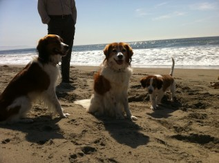 Amica, Nelle, & Toni at the beach